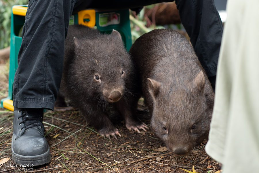 Healesville Sanctuary - Things to do in the Yarra Valley
