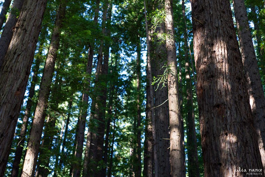 Redwood Forest Warburton - Things to do in the Yarra Valley