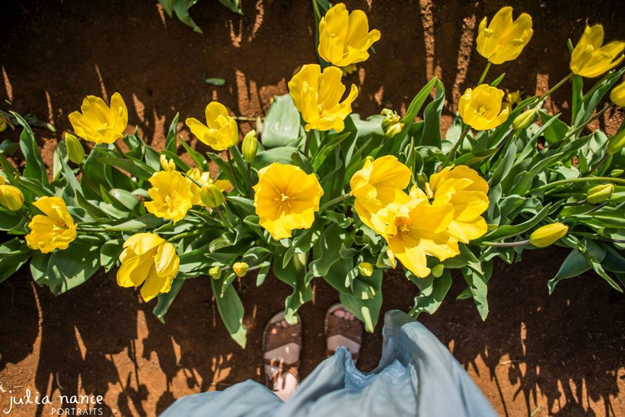 Tulip Festival - Things to do in the Yarra Valley