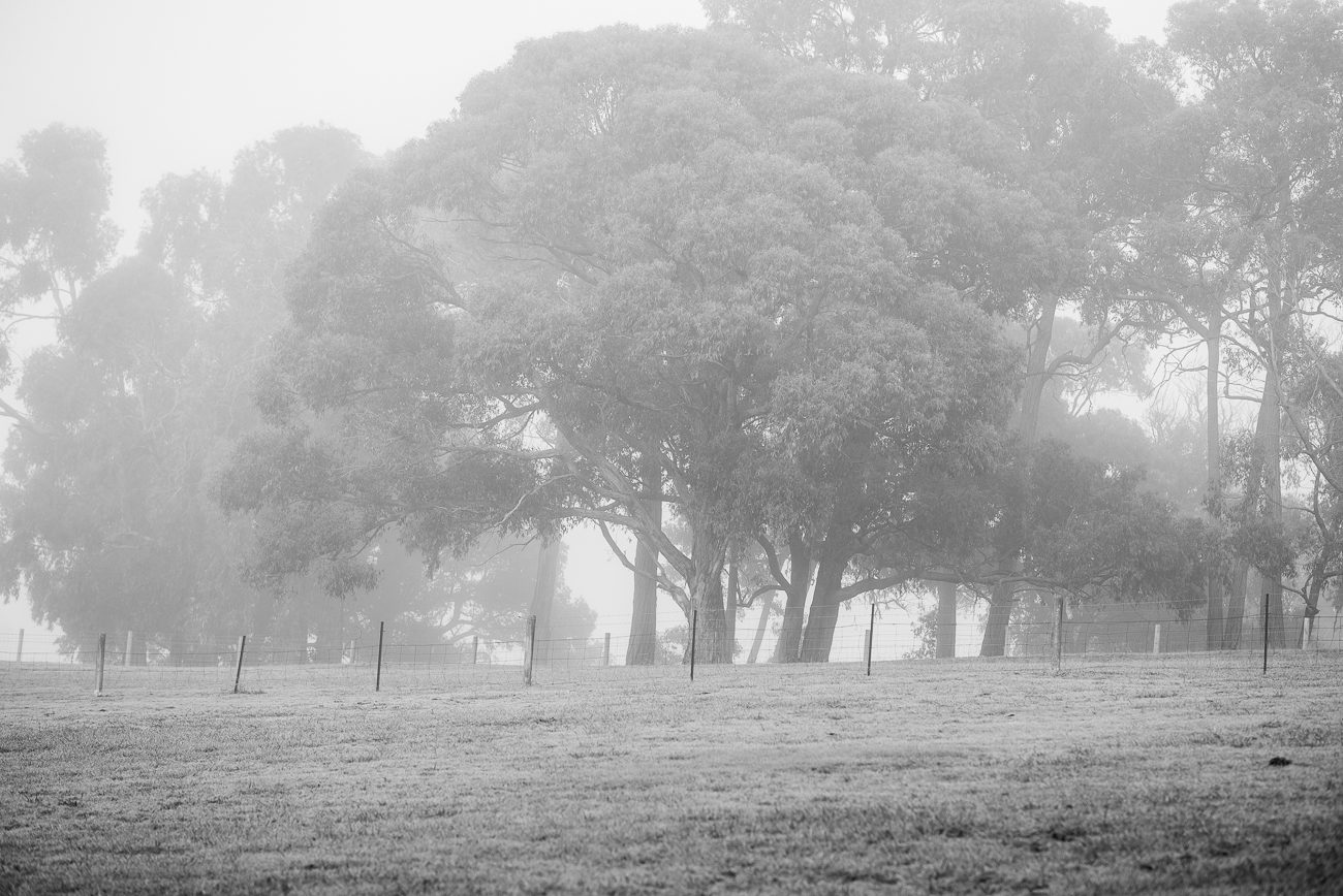 Black and white photo of paddock and trees